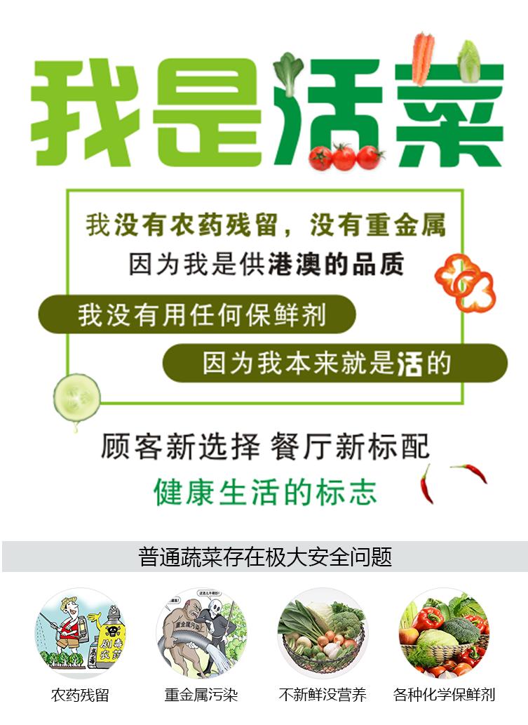 蔬菜描述页1.png